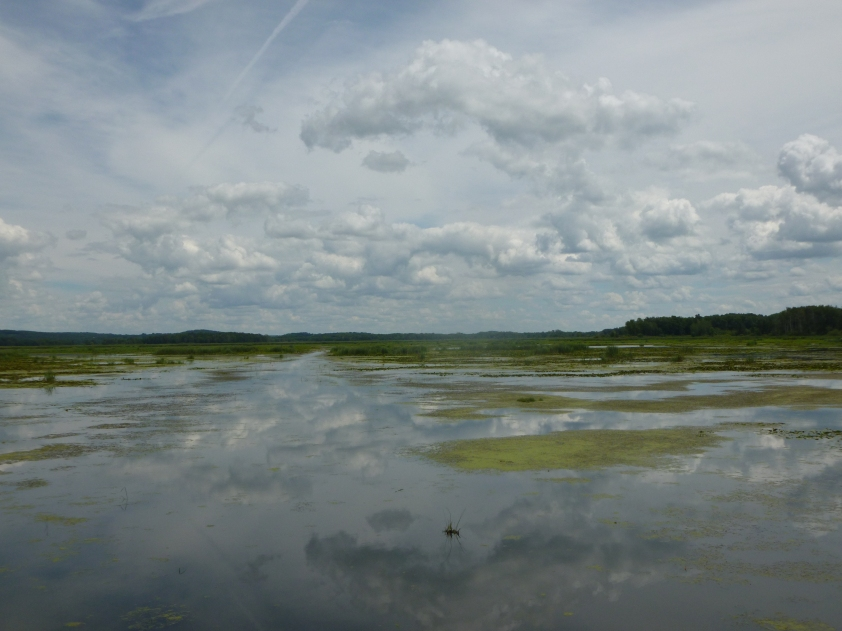French Creek Wetland