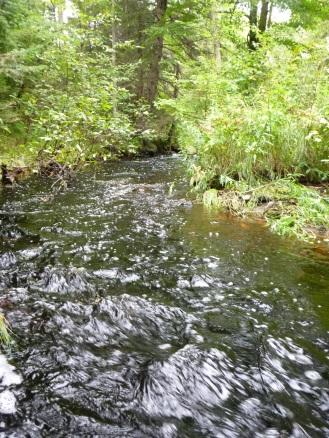 Bear creek in flood.