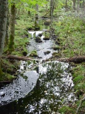 Another swollen creek.
