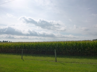 Corn and clouds.