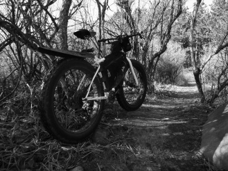 Into the woods (and 2015).