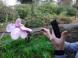 SF Botanical Garden.